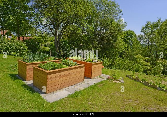 Raised Beds With Vegetables In A Garden, Germany   Stock Image