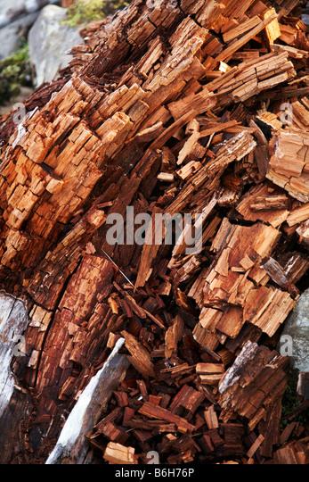 how to kill a pine tree stump