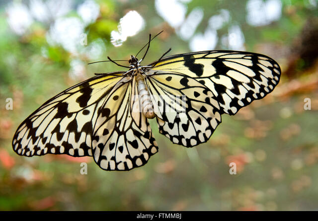 Paper wings stock photos paper wings stock images alamy for White paper butterflies