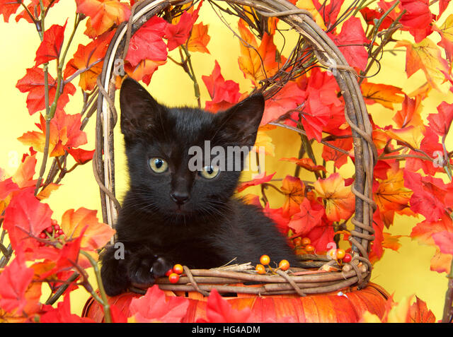 Fuzzy Black Background : Fuzzy leaves stock photos images alamy