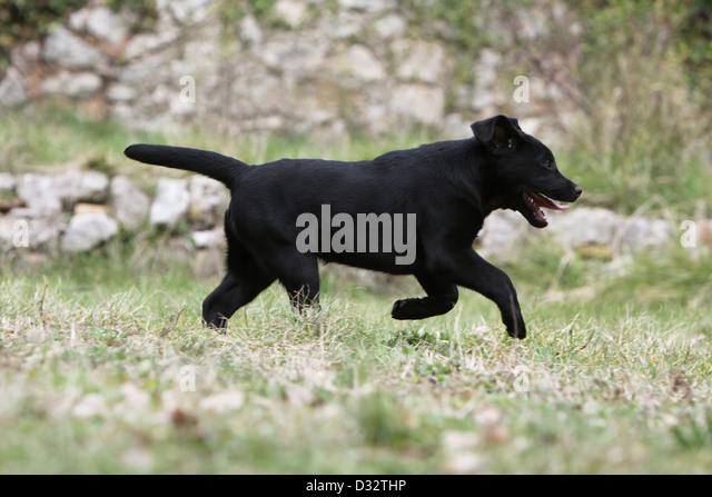 The black dog runs at night dwh 3