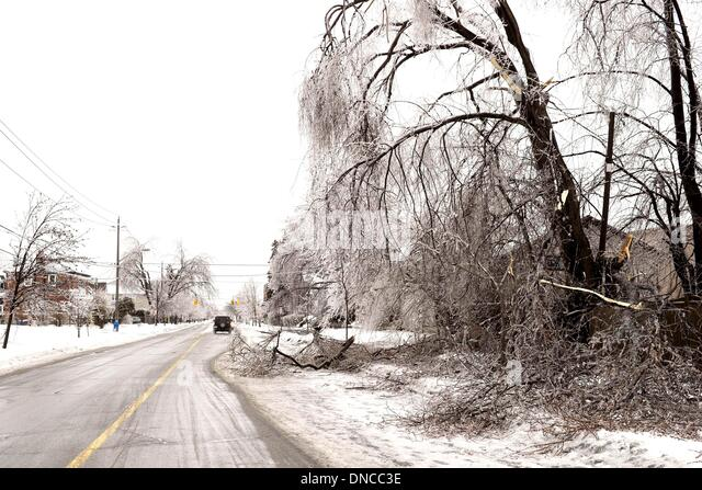 how to carefully cut trees near powerlines