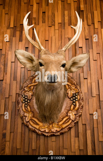 Antlers On Wall Stock Photos Amp Antlers On Wall Stock