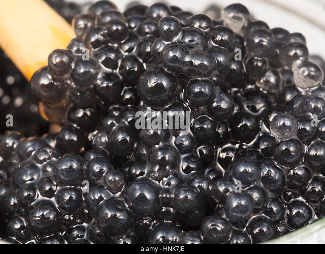 Dyed fish stock photos dyed fish stock images alamy for Black caviar fish