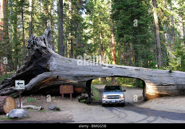 Tunnel log stock photos tunnel log stock images alamy for Log cabin sequoia national park