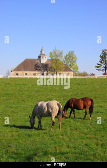 Kentucky Horse Pasture Stock Photos & Kentucky Horse