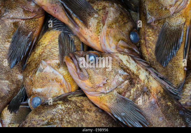 Chinatown vancouver stock photos chinatown vancouver for Rock cod fish
