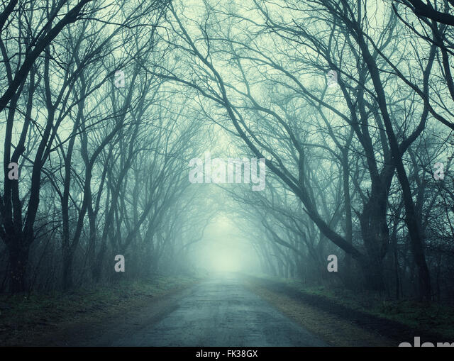 fog road spooky stock photos amp fog road spooky stock