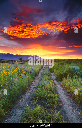 Bishop (CA) United States  City pictures : The Bishop Of Stock Photos & The Bishop Of Stock Images Alamy
