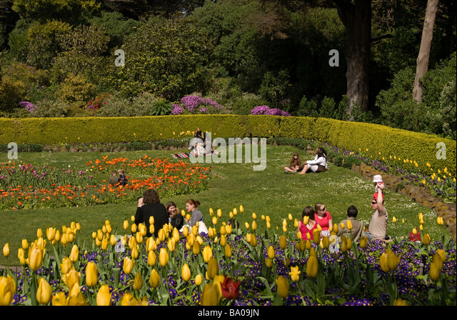 Golden Tulip Stock Photos Golden Tulip Stock Images Alamy