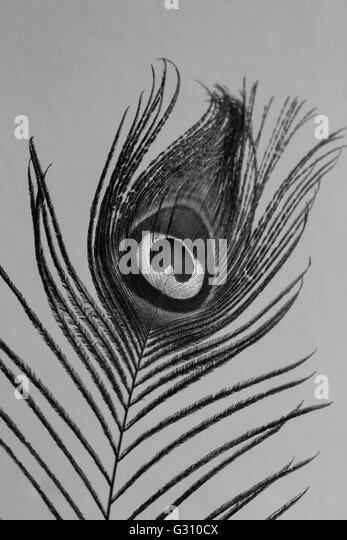 Peacock Feather Black and White Stock Photos & Images - Alamy