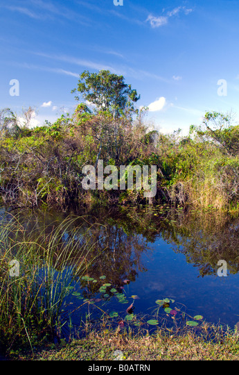 the florida everglades a wetlands To most people, restoration of florida's everglades means recovering and  protecting the wetlands of south florida what many don't realize is.