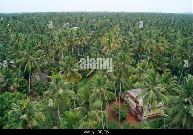 Coconut Plantation Kerala Stock Photos & Coconut ...