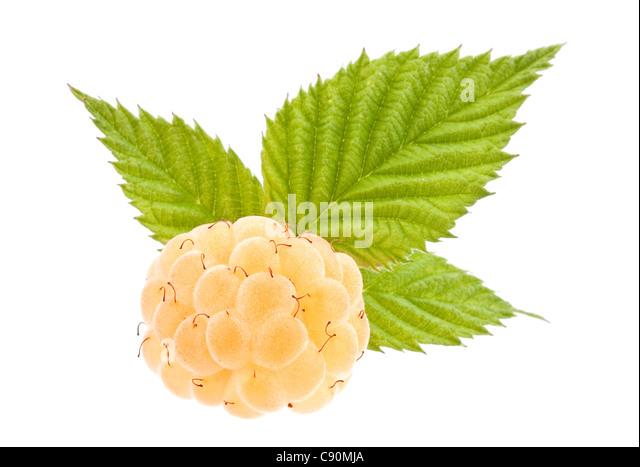Rose raspberry fruit closeup isolated on white background Stock ...