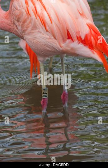 flamingo island owl modelle