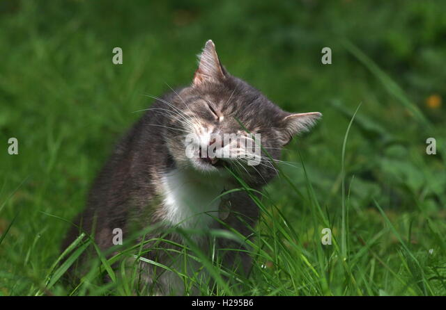 Cat Vomit Stock Photos Amp Cat Vomit Stock Images Alamy