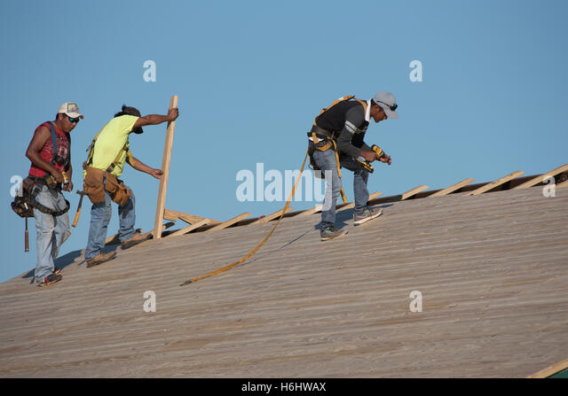 Florida USA Team Of Three Roofers Wearing Safety Harnesses Replacing A  Wooden Roof   Stock Image