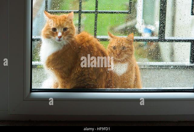 Cat Wants Stock Photos Amp Cat Wants Stock Images Alamy