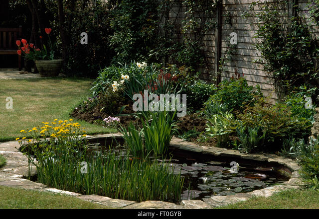 Domestic ponds water town stock photos domestic ponds for Garden pond edging