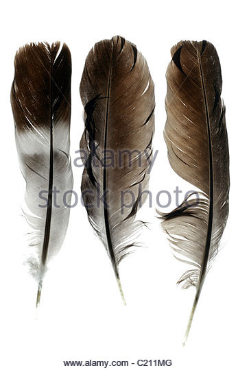 Different bird feathers - photo#27