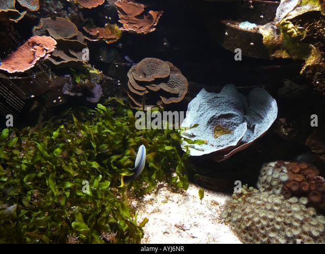 nausicaa aquarium stock photos nausicaa aquarium stock images alamy