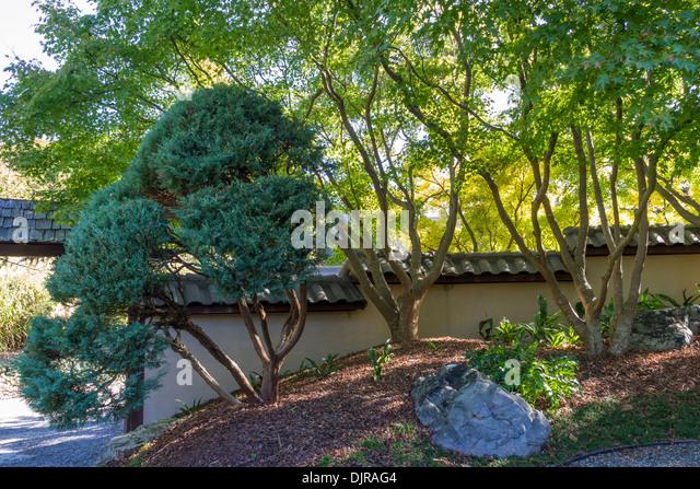 Japanese Garden At Norfolk Botanical Gardens   Stock Image