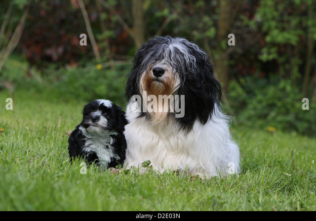 Black And White Toy Dog Stock Photos & Black And White Toy