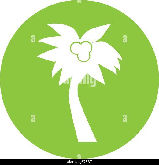Stylized Icon Palm Tree Stock Photos Stylized Icon Palm Tree Stock