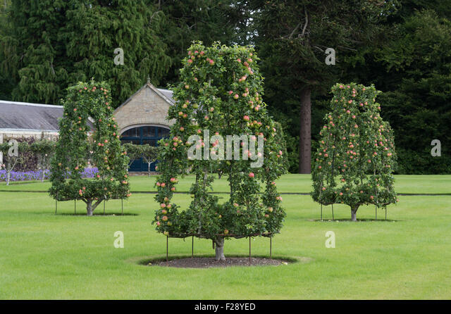 Trained fruit trees stock photos trained fruit trees for Garden trees scotland