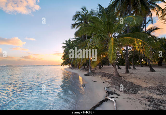 hawaiian paradise island palms - photo #29