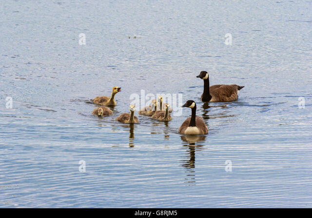 where to buy canada goose in oakville