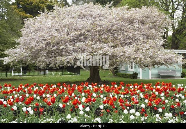 Spring gardens blossom stock photos spring gardens for Landscape gardeners christchurch