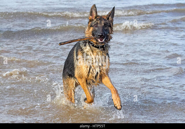 Dogs day out, Ainsdale, Merseyside. 14th March 2017. Gorgeous 10 ...