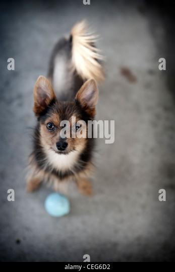 Dog Funny Stock Photos Dog Funny Stock Images Alamy - Dogs looking funny with toys