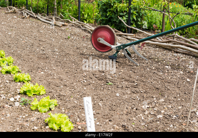 A Hand Propelled Garden Cultivator Tiller Being Used To Turn Over The Soil  Between Rows Of