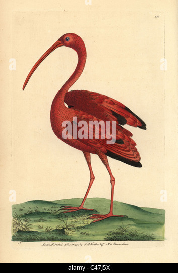 Scarlet ibis movie 2010