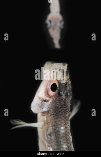 Pescaderia stock photos pescaderia stock images alamy for Big fish eat little fish