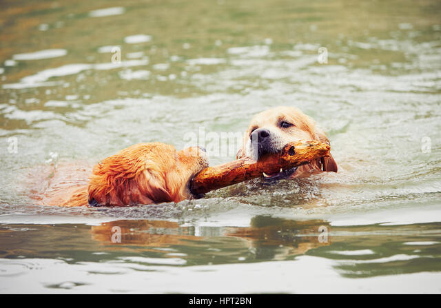 dog two action stock photos dog two action stock images alamy. Black Bedroom Furniture Sets. Home Design Ideas
