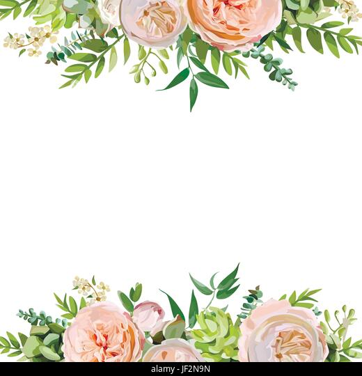English Rose Stock Vector Images