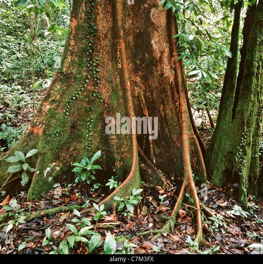 how to cut hardwood tree