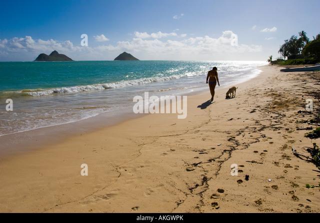 Dog Walks Oahu