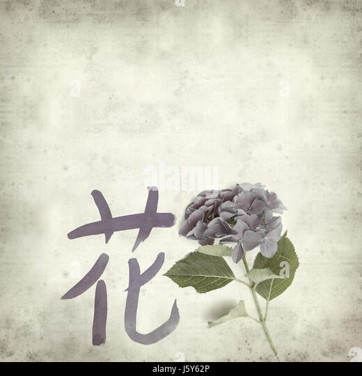Chinese Hydrangea Stock Photos Chinese Hydrangea Stock Images Alamy