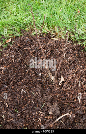 how to use composted cow manure in the garden
