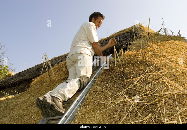 Thatcher inserting spar to new straw thatch on roof - Stock Image & Roof Spar Stock Photos u0026 Roof Spar Stock Images - Alamy memphite.com