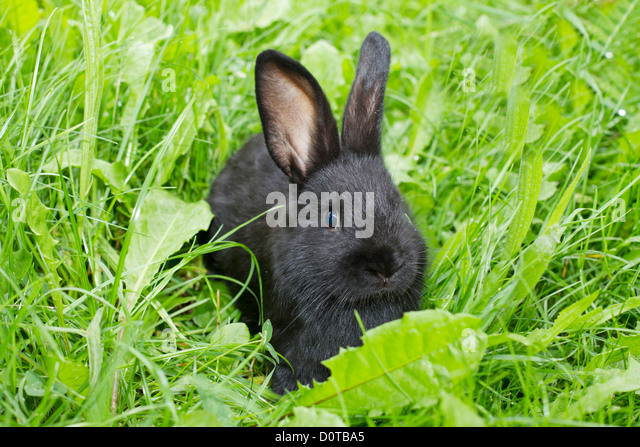 domestic rabbit and animal rabbit rabbits Rabbit rescue organizations by location find animal rescue groups nearest you volunteer or adopt an animal today and save a life.