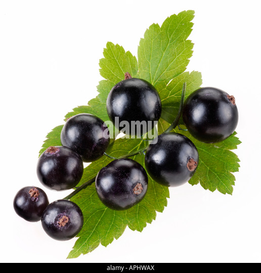 how to make blackcurrant jelly from cordial
