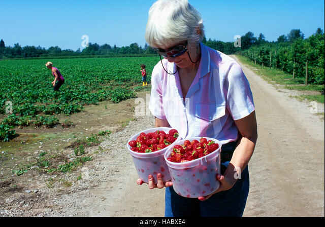 strawberry valley women Buy low price, high quality strawberry charms with worldwide shipping on aliexpresscom.