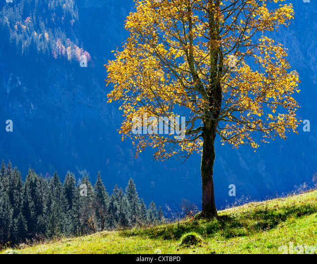 fagus senior singles Find fagus stock images in hd and millions of other royalty-free stock photos, illustrations, and vectors in the shutterstock collection thousands of new, high-quality pictures added every day.