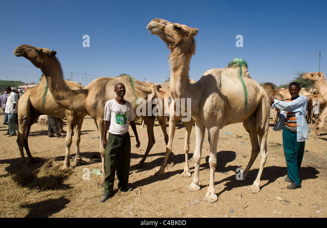 Hargeisa Somaliland Hargeysa Stock Photos &amp- Hargeisa Somaliland ...