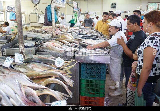 Panama market stock photos panama market stock images for City fish market